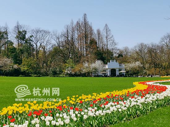 杭州人口数量_这10个城市人口增长最快杭州增量超深圳首次领跑